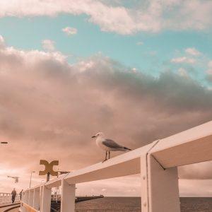 The Busselton Bird